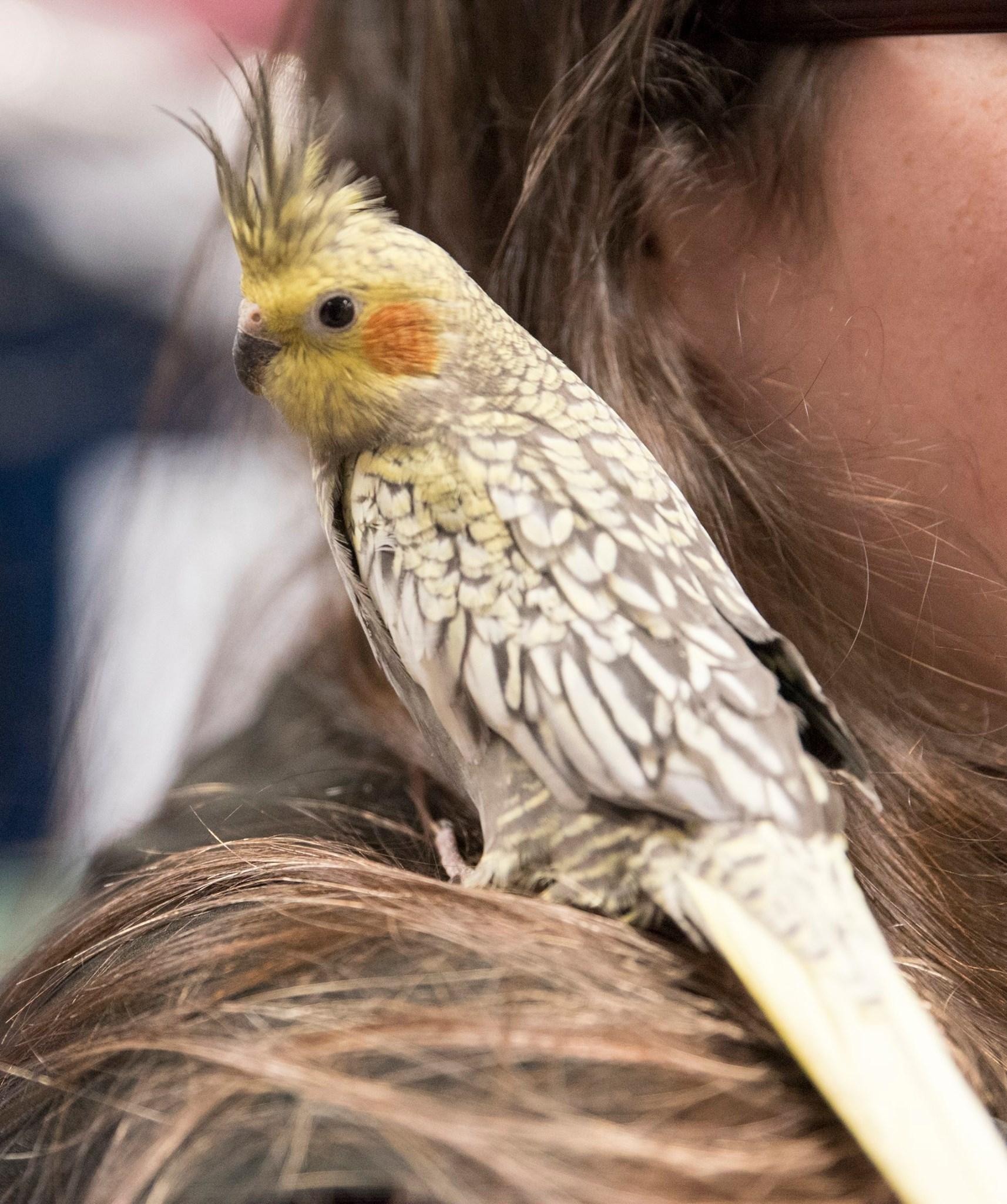 Available Birds   Petland Pickerington, OH